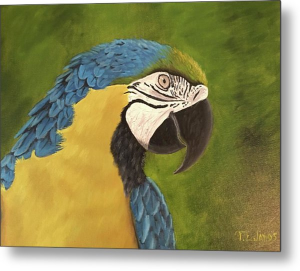 Blue And Gold Mccaw Metal Print
