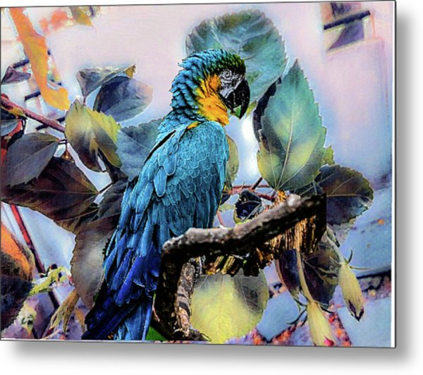 Blue Parrot Metal Print