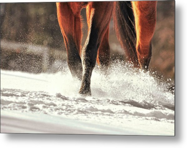 Blustery Trot Metal Print by JAMART Photography