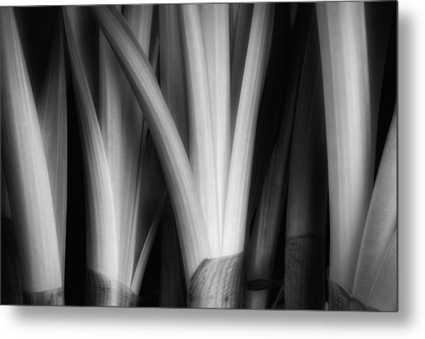 Botanical Abstract Metal Print