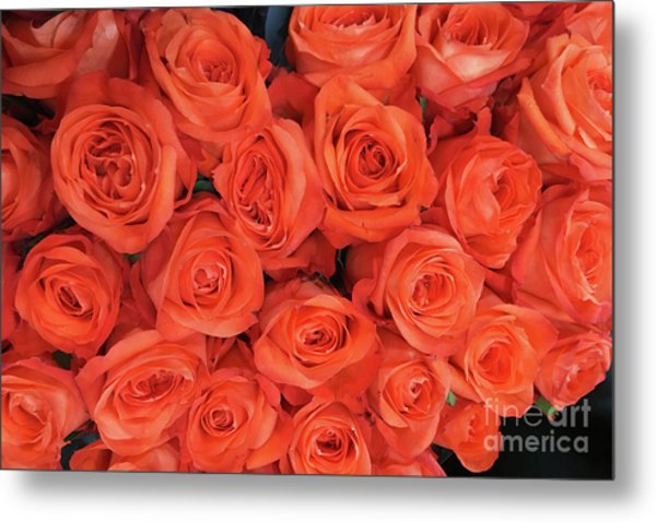 Bouquet Of The  Living Coral Roses Metal Print