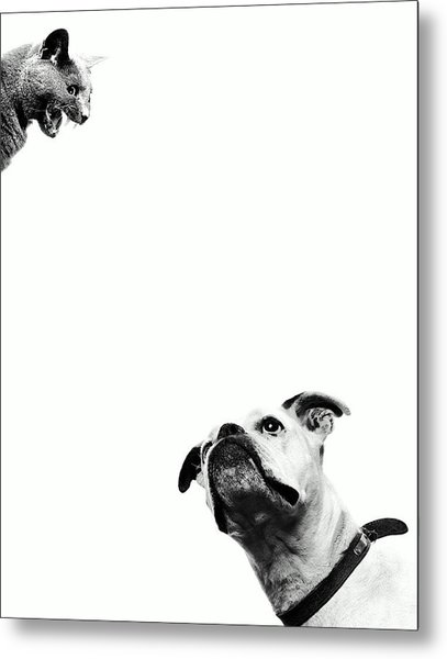 Boxer Dog Looking At Cat Above Head Metal Print by Robert Daly