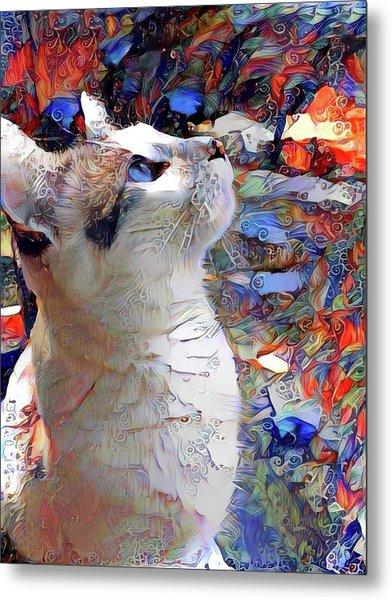 Brady The Half Siamese Half Tabby Cat Metal Print