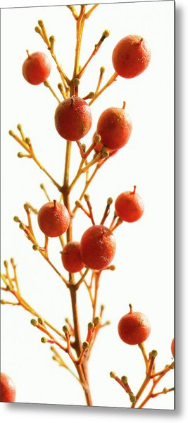 Brazilian Pepper 0482 Metal Print
