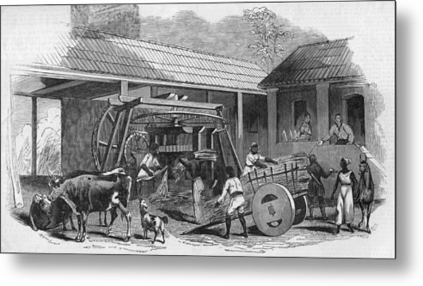 Brazilian Sugar Mill Metal Print by Hulton Archive