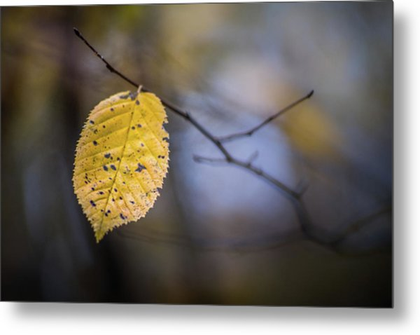 Metal Print featuring the photograph Bright Fall Leaf 1 by Michael Arend