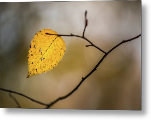 Metal Print featuring the photograph Bright Fall Leaf 10 by Michael Arend