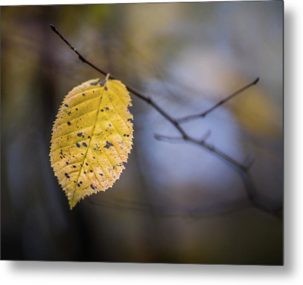 Metal Print featuring the photograph Bright Fall Leaf 3 by Michael Arend