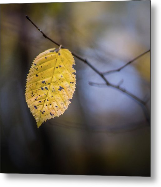 Metal Print featuring the photograph Bright Fall Leaf 5 by Michael Arend