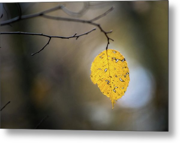 Metal Print featuring the photograph Bright Fall Leaf 6 by Michael Arend