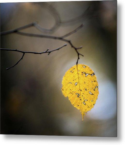 Bright Fall Leaf 7 Metal Print