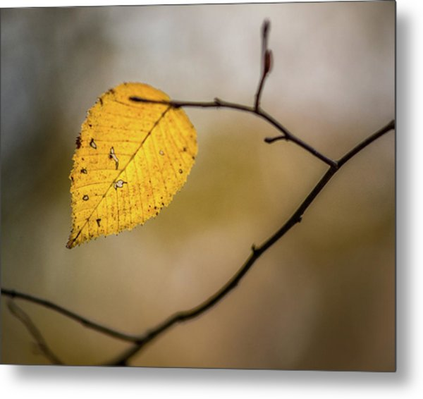 Metal Print featuring the photograph Bright Fall Leaf 9 by Michael Arend