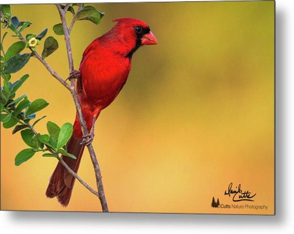 Bright Red Cardinal Metal Print