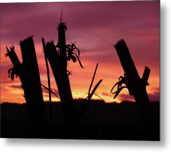 Broken Trees - Sunset Silhouettes Metal Print