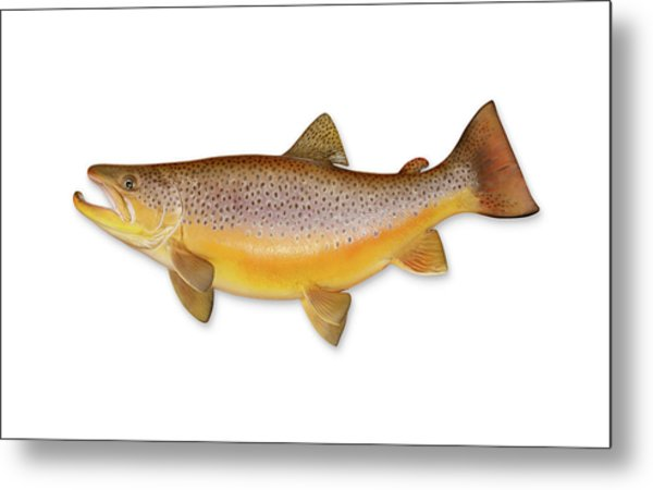 Brown Trout With Clipping Path Metal Print by Georgepeters