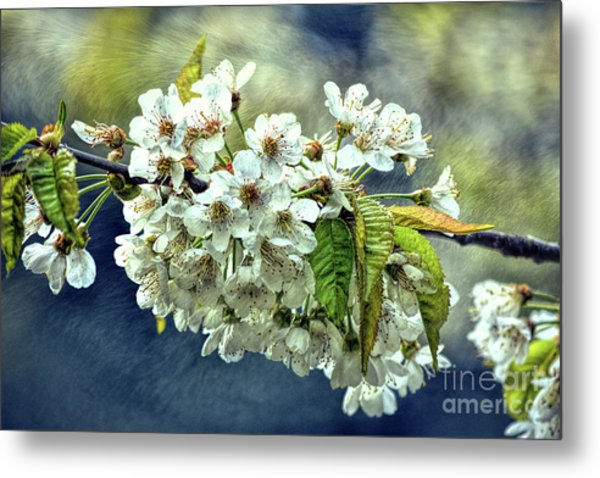 Budding Blossoms Metal Print