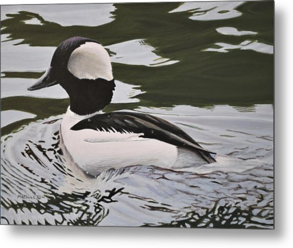 Metal Print featuring the painting Bufflehead by Peter Mathios