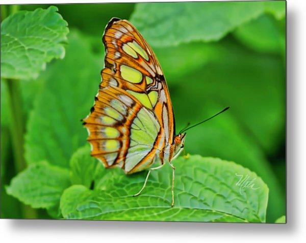 Butterfly Leaf Metal Print