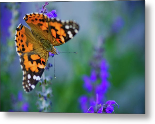 Metal Print featuring the photograph Butterfly by Nicole Young