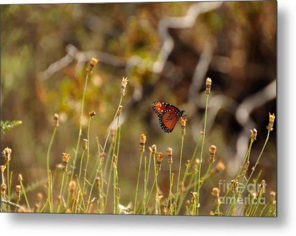 Butterfly On Wildflower In Joshua Tree Metal Print