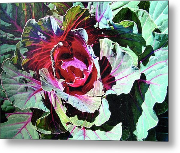 Cabbage Metal Print
