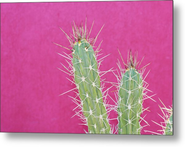 Cactus Against A Bright Pink Wall Metal Print