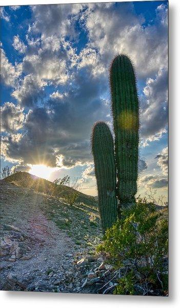 Cactus Portrait  Metal Print