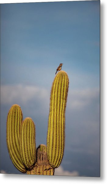 Cactus Wren Metal Print