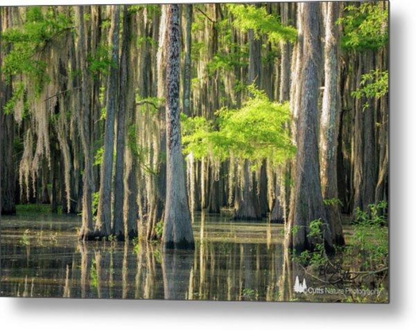 Caddo Swamp 1 Metal Print