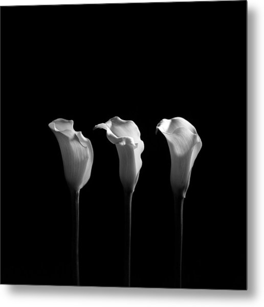 Calla Lilies In Black And White Metal Print