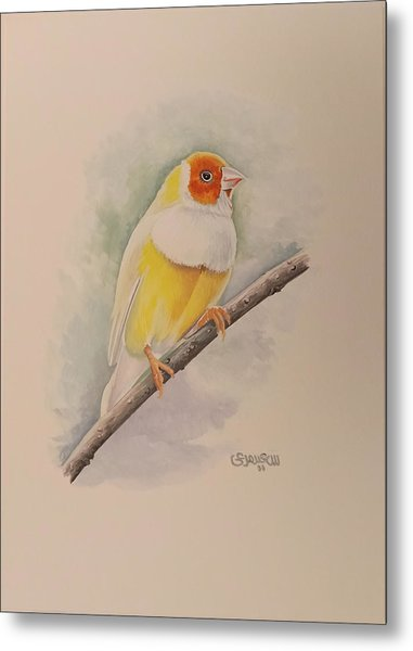 Canary Bird Metal Print