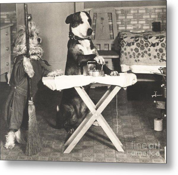 Canine Chores Metal Print