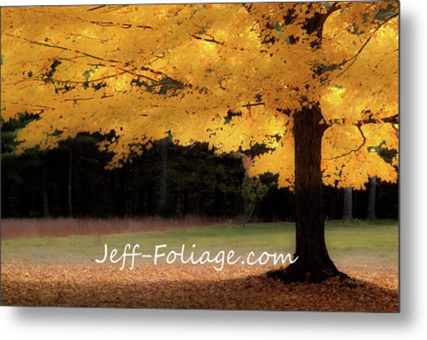 Canopy Of Gold Fall Colors Metal Print