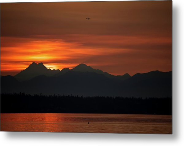 Cardboard Mountains Metal Print by Tom Trimbath