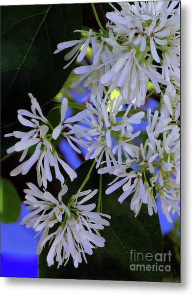 Carly's Tree - The Delicate Grow Strong Metal Print