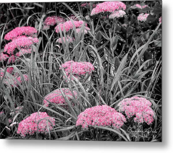 Carved Pink Butterfly Bush Metal Print