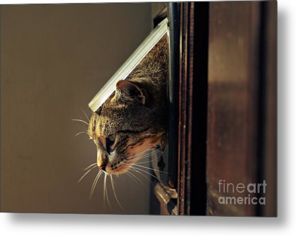 Cat Crawls Out Of The House Through A Metal Print