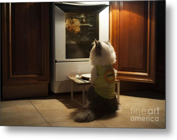 Cat Expects Cooking Chicken Metal Print