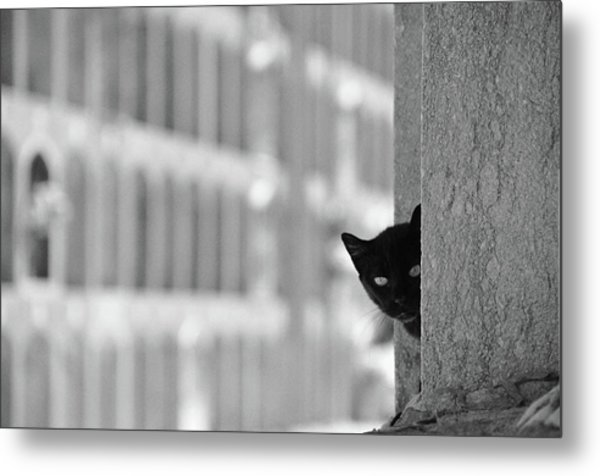 Cat In Cemetery Metal Print by All Copyrights Reserved By Harris Hui