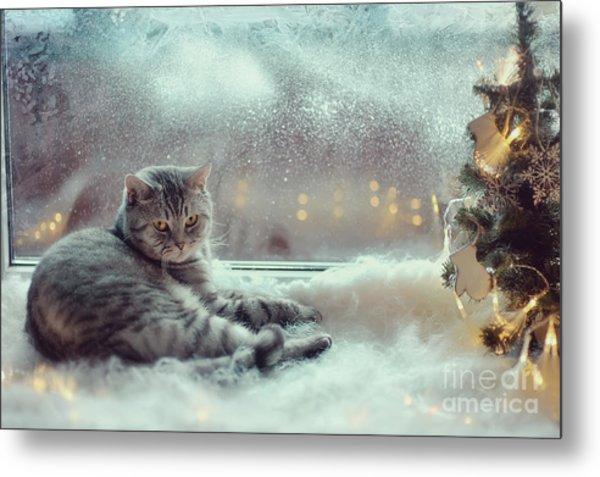 Cat In The Winter Window Metal Print