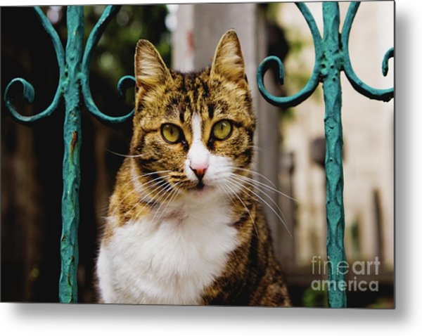 Cat On A Fence Metal Print