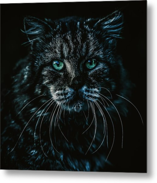 Metal Print featuring the photograph Cat by Rob D