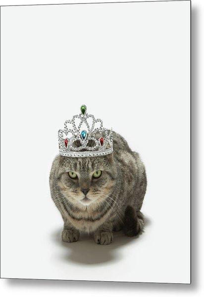Cat Wearing A Tiara Metal Print by Tim Macpherson