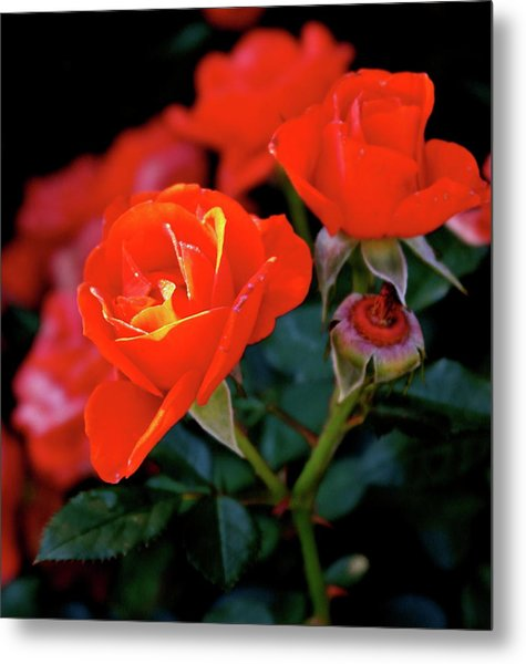 Catch The Morning Metal Print
