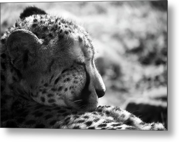 Metal Print featuring the photograph Catnap by Whitney Goodey