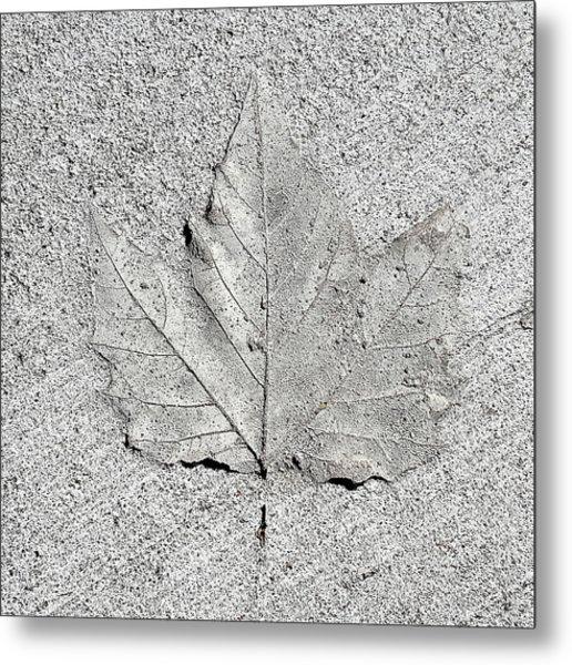 Cement Leaf Metal Print