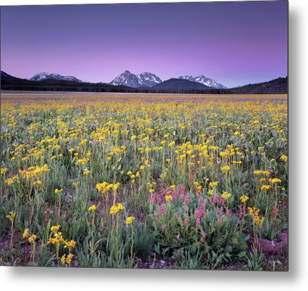 Central Idaho Color Metal Print by Leland D Howard