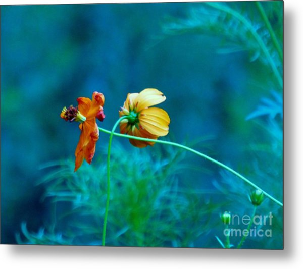 Metal Print featuring the photograph Chance Meeting by Rosanne Licciardi