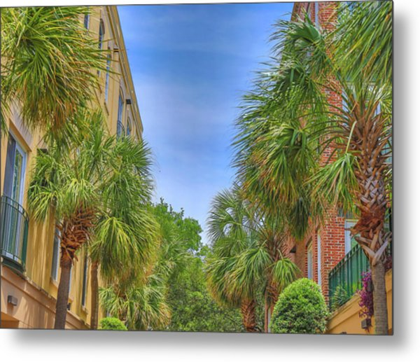 Charleston Palmetto Trees Metal Print