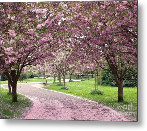 Cherry Blossom In Spring Metal Print